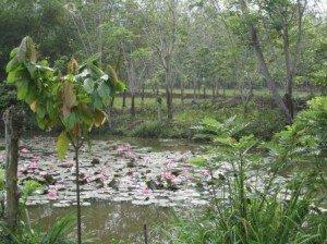 011 Padang Sidempuan-Kota Nopan 23-08-2014