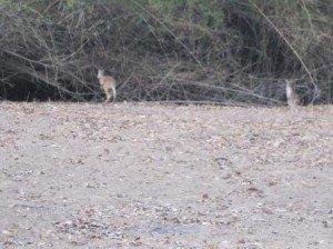 016 Darwin-Adelaïde River 23-10-2014