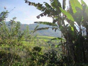 018 Ruteng-Bajawa 11-10-2014
