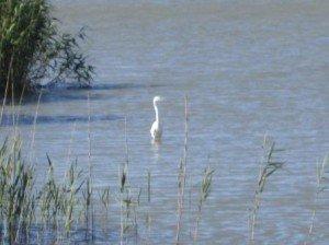 015 Adélaïde-Lake Albert 25-11-2014