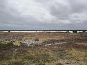 035 Lake Albert-Kingston 26-11-2014
